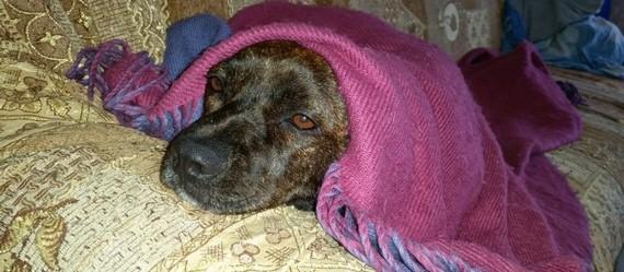 השמיכה שלכם יכולה לשנות לכלב את החורף! לפרטים לתרומת שמיכות