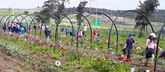 """פעילויות חדשות של """"החקלאים הצעירים"""" בחווה החקלאית בנהלל"""
