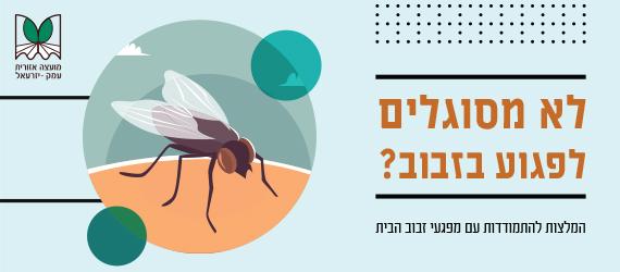 לא מסוגלים לפגוע בזבוב? הנחיות להתמודדות עם מפגעי הזבובים