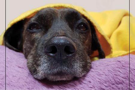 'קור כלבים' - מבצע איסוף שמיכות לכלביות