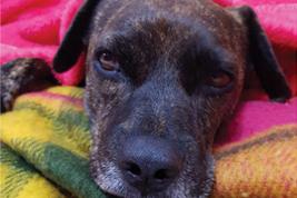 קור כלבים - מבצע איסוף שמיכות לכלביות בעמק