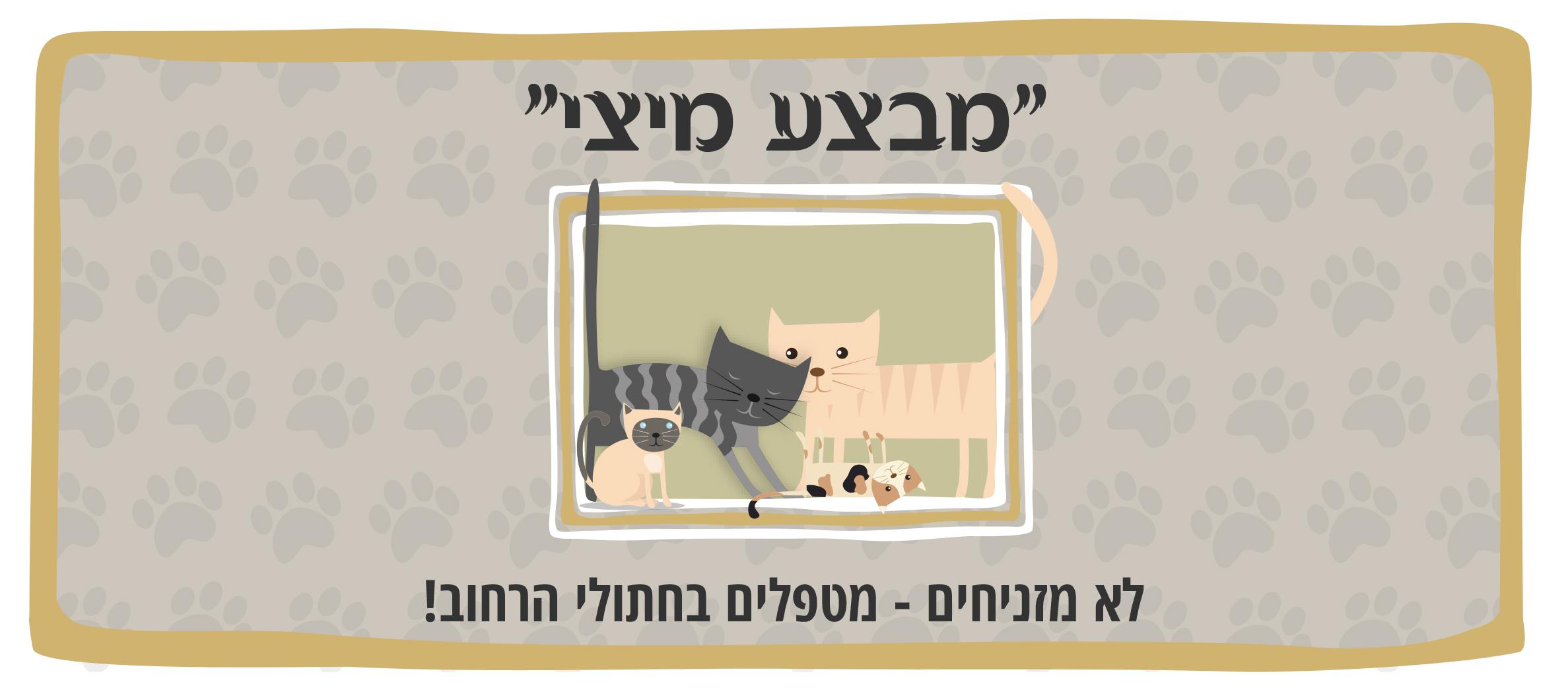 מבצע מיצי לעיקור וסירוס חתולי רחוב