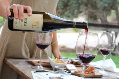 בשביל היין - יקבים בעמק יזרעאל